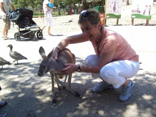 The Pines at Sanctuary Cove: Kangoroo