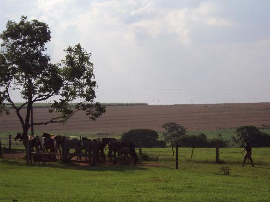 Fazenda Laranjal Guest Ranch: catching the horses in the morning