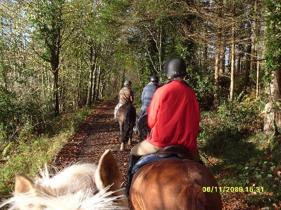 Castle Leslie Estate: horse riding round the estate