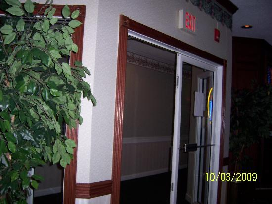 Wintergreen Resort & Conference Center: View from bar into hallway- tree in front of glass for safety