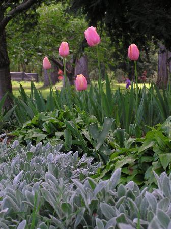 Rippinvale Retreat : A corner of the garden