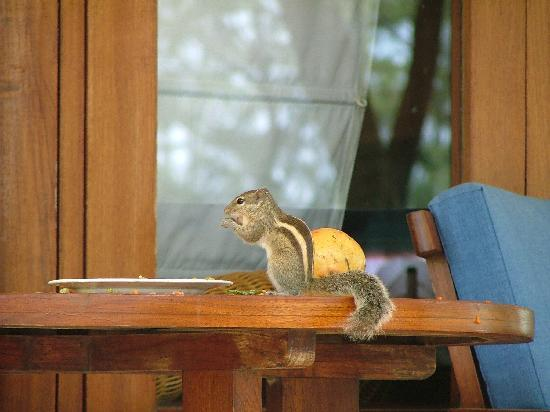 Covelong, India: Squirrel by the porch