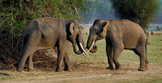 Orange County Resorts Kabini: Elephants