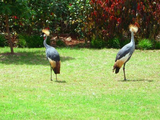 The Octagon Safari Lodge : Birds