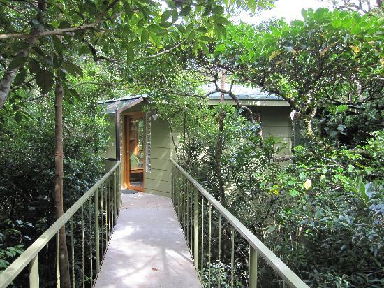 Hidden Canopy Treehouses Boutique Hotel Walkway to our private treehouse Eden & Walkway to our private treehouse Eden - Picture of Hidden Canopy ...