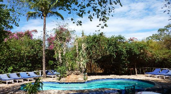Fig Tree Camp: la piscine