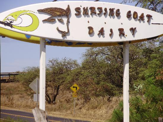 Surfing Goat Dairy: The entrance