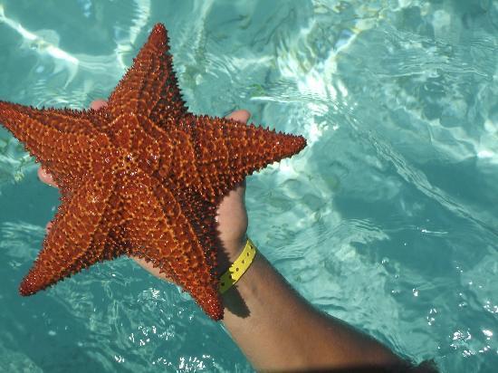 Punta Cana, Dominikana: estrellas de mar, cecra de Isla Saona