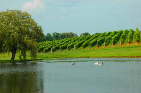 Keswick Vineyards: Pond in front of the vineyard