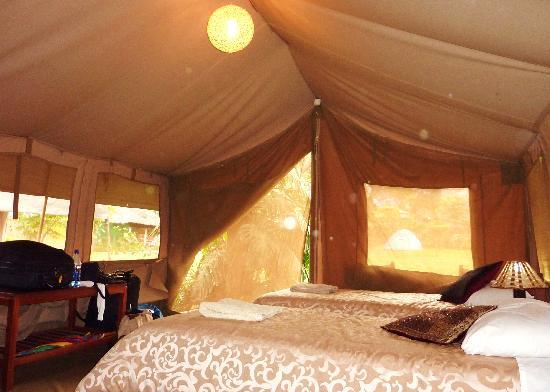 Wildebeest Eco Camp: tente