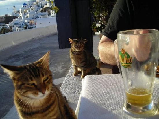 Imerovigli Tavern: cats at the Taverna Imerovigli