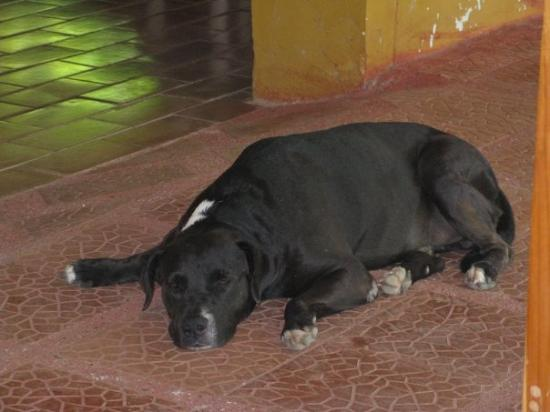 Esterillos Este, Costa Rica: Our CR dog, his name was Stain hes spanish too!