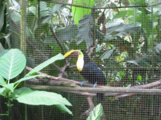Simon Bolivar Parque Zoologico  y Jardin Botanico Nacional: Tucan Sam!