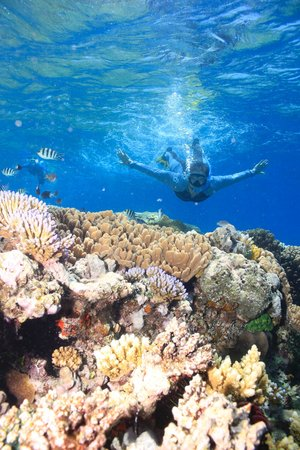 Calypso Reef Cruises: Who knew snorkeling would be so great?