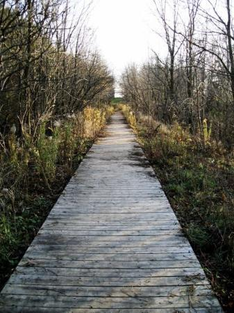 Stratford, Canada: Boardwalk path along old railbed.
