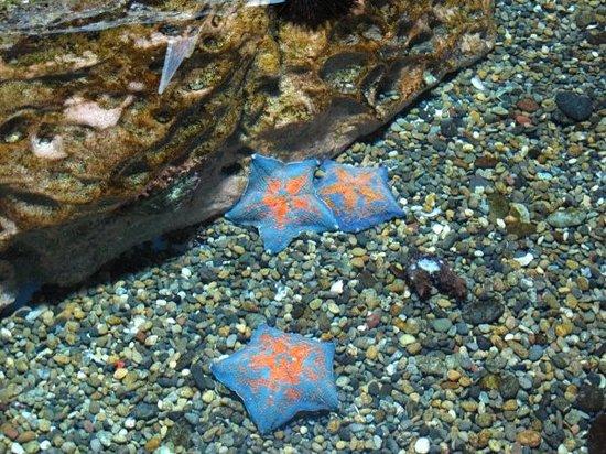 Noboribetsu Marine Park Nixe : 可以摸海星