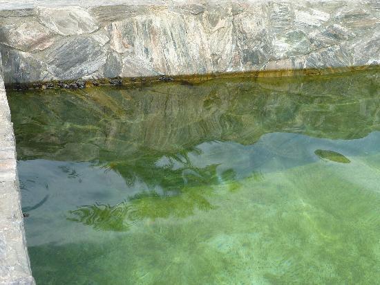 Le Meridien Dahab Resort: vue de l'eau de mer de la piscine la plus chaude 30° mais pleine de verdures gluantes