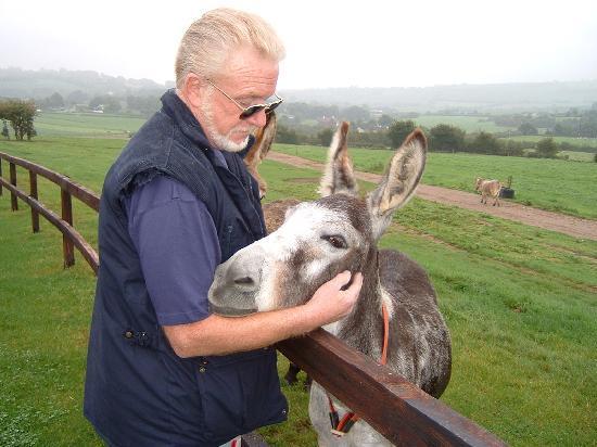 The Farm Cottages: Donkey Sanctuary at Lisscarroll