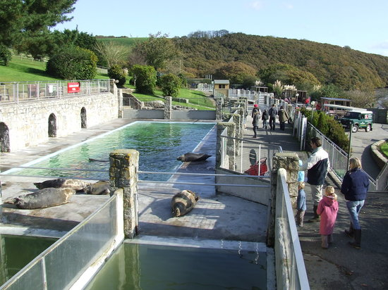 Cornish Seal Sanctuary,SEA LIFE Trust