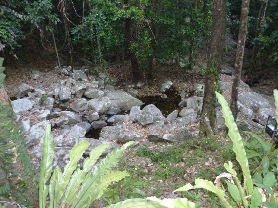 Cairns Reef 'n Rainforest B&B: rainforest