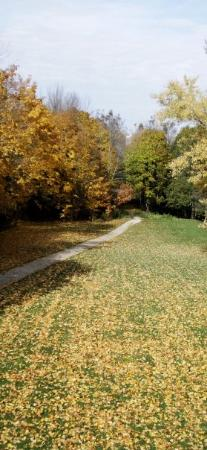 Stratford, Canada : Another walking path, not on the river. (Oct 26 09)