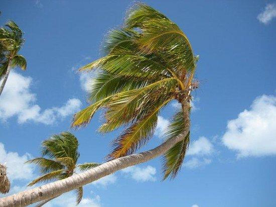 Hotel Riu Naiboa: Ca, c des vacances....