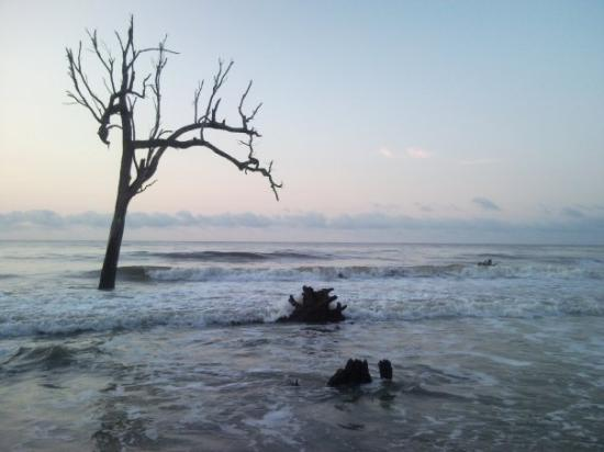 Hunting Island State Park Foto