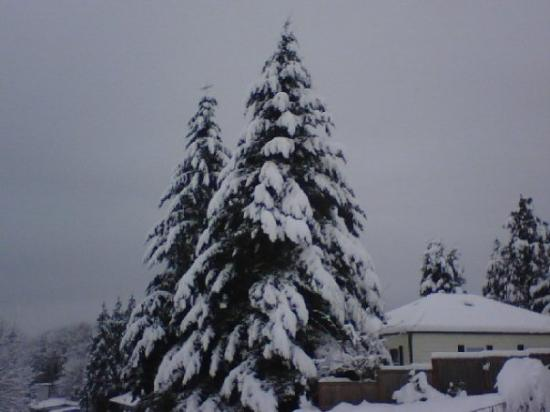อาร์ลิงตัน, วอชิงตัน: Now THAT'S a Christmas tree! Arlington, WA (2009)