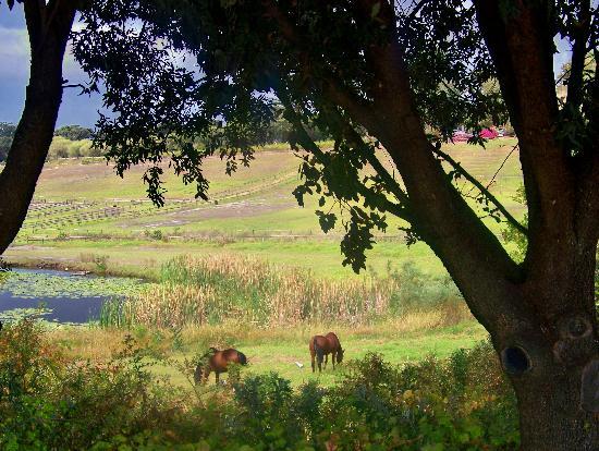 Buitenverwachting : Horses grazing
