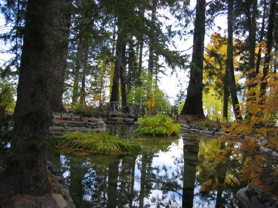 Tahoe Photographic Tours: Fall colors reflecting in the pond