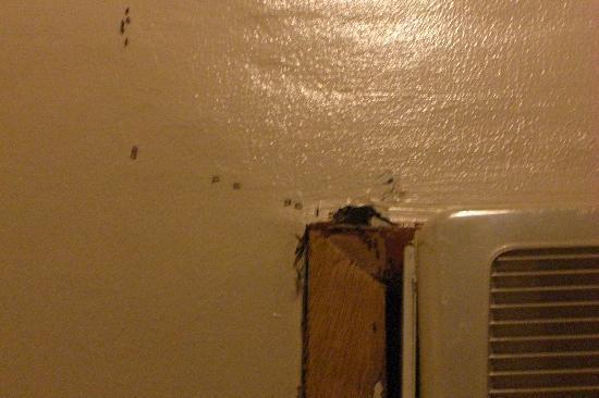 Sabin Resort Hotel: Ants in room