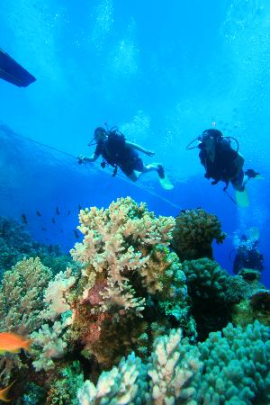 Le Meridien Dahab Resort: Diving at Gabr El Bint