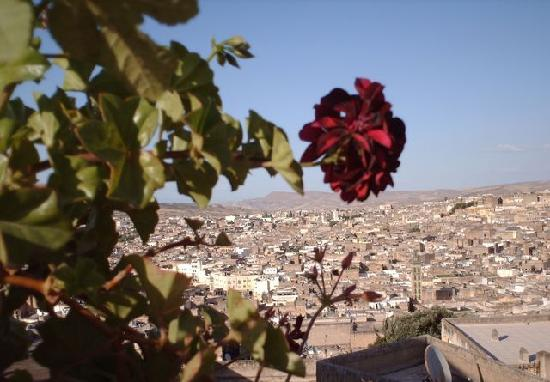Dar Al Safadi: vue de la terrasse