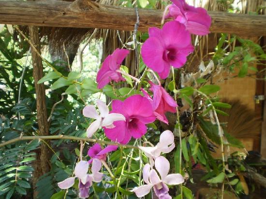Treehouse: Flowers everywhere
