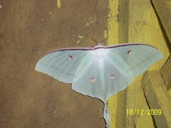 Saputara, India: Beautiful Moth