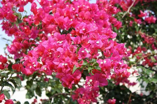 Tolle Blumen In Der Hotelanlage Picture Of Airone Hotel Baia