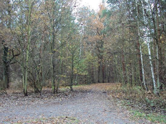 JETpak Hostel : il bosco dov'è immerso l'ostello