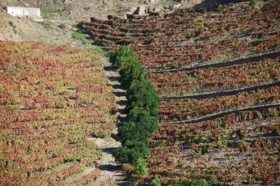 Pinhao, Portugal: Douro - vinhas