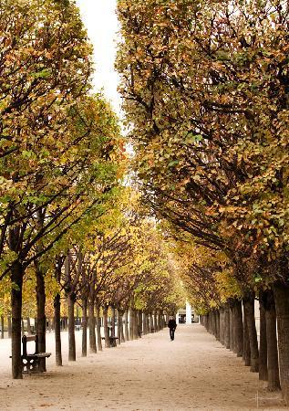 Photo Tours In Paris: Jardin de Palais Royale