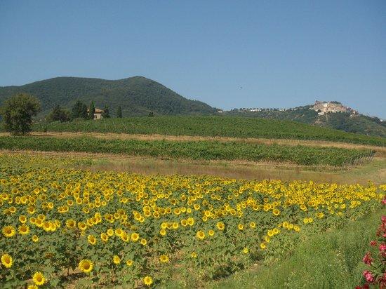 Castiglione Della Pescaia, Italy: La Fattoria