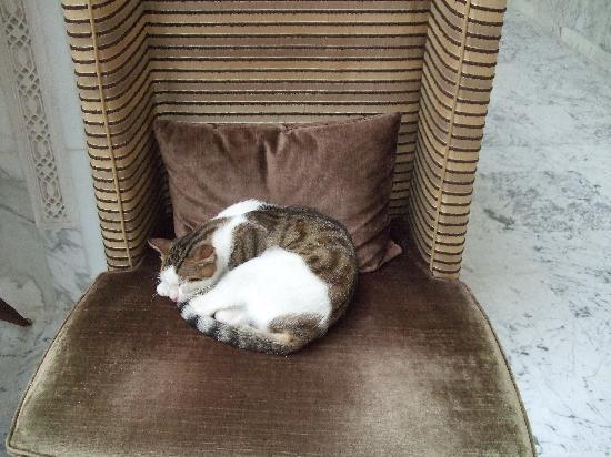 Steigenberger Kantaoui Bay: Cats on Furniture