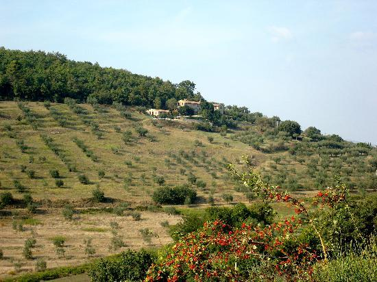 Podere Monte Petreto: View of the olive farm and apartments