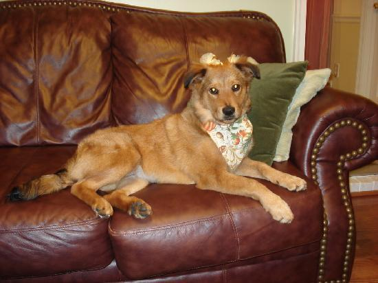 Days Inn Lebanon/Fort Indiantown Gap: My doggie loved it here