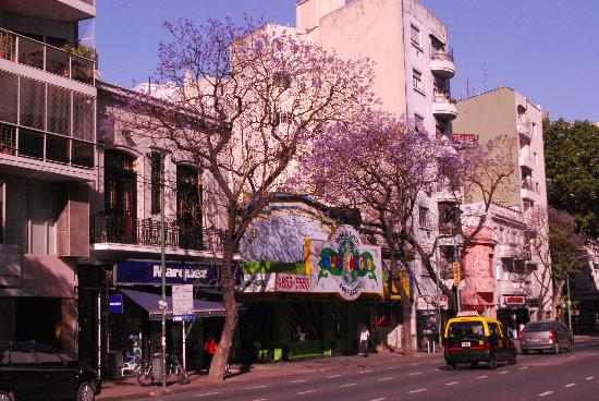 Amable Buenos Aires hostel: The older house, just behind the blossoming jacaranda.