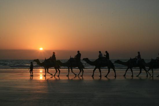 Broome, Australie : Sunset Camel Rides