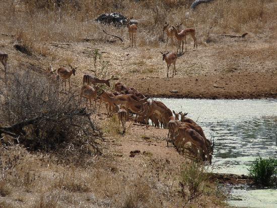 Garonga Safari Camp : The view from our room!