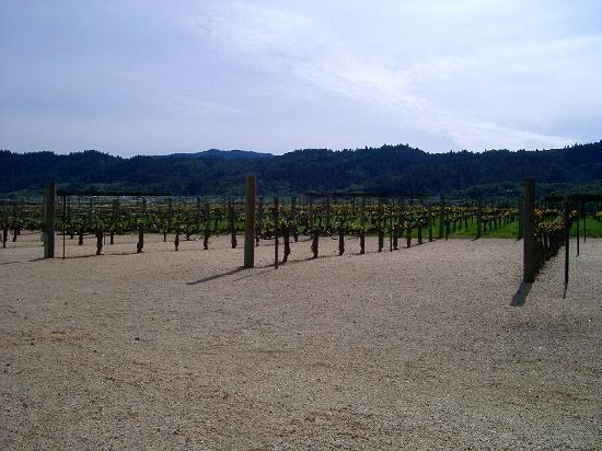 Robert Mondavi Winery: ブドウ畑