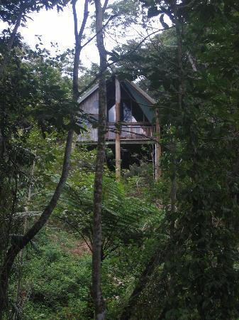 Rose Gums Wilderness Retreat: Maison dans l'arbre - Rose Gums