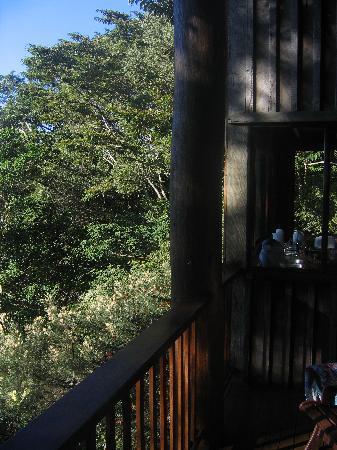 Rose Gums Wilderness Retreat: Le balcon de la maison dans l'arbre - Rose Gums