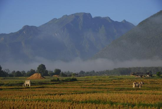 Chiang Dao, Tajlandia: Paddy fields and mountains behind the resort